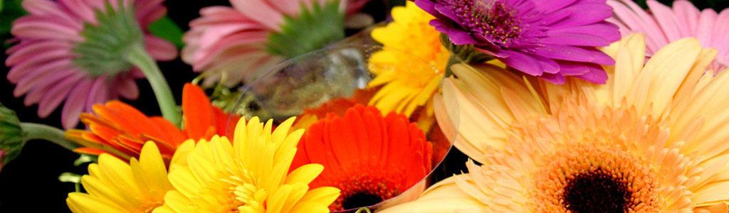 Sierra Floral Designs